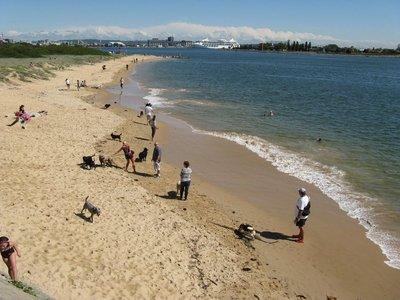 Nobbys Beach dog beach