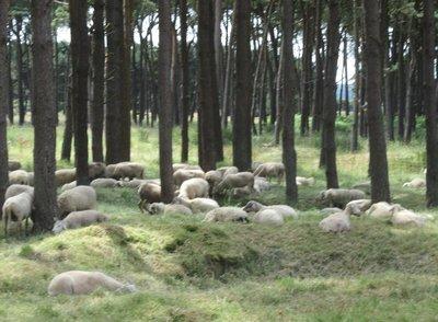 Vimy Ridge lawn mowers
