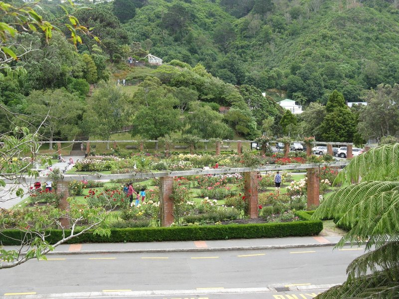Rose Garden at Wellington Botanic Garden