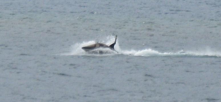 Shark-like hydro attack ride