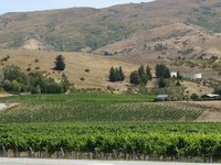 Vineyards by Cromwell