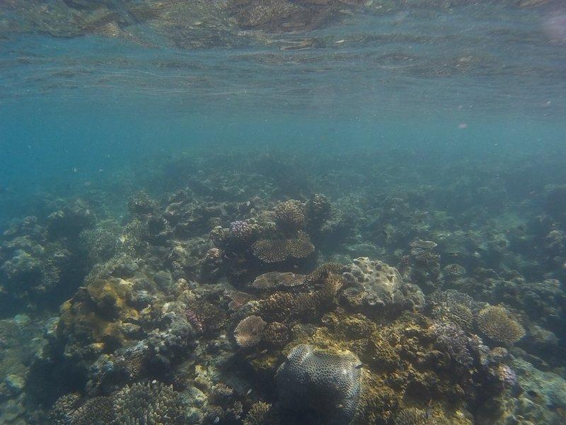 Snorkeling around the Whitsundays