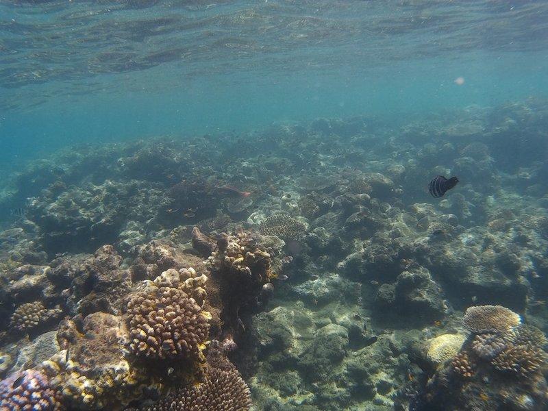 Coral Reef Whitsundays
