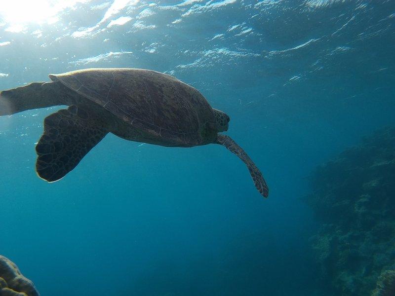 Turtle looks majestic