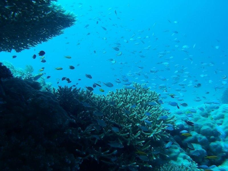 Heaps of Fish