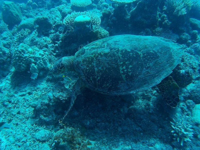 Camouflage Turtle