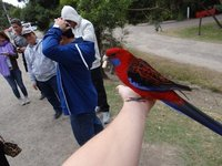 Parrot on my hand