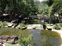 Salt Water Crocodile Compound