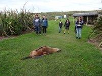 'Dead' Sea Lion