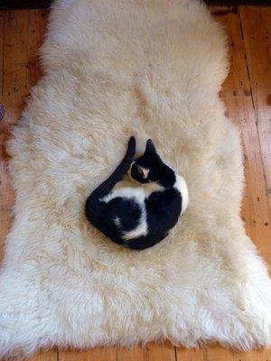 Cat_sheepskin.jpg