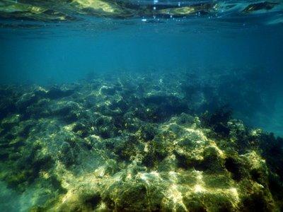 Coral_Myall_Beach.jpg