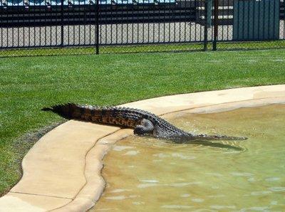 Crocodile_Show2.jpg