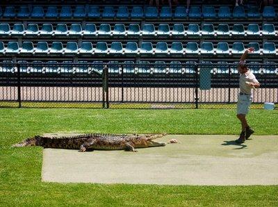 Crocodile_Show8.jpg
