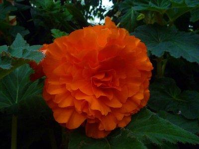 Flower_orange.jpg