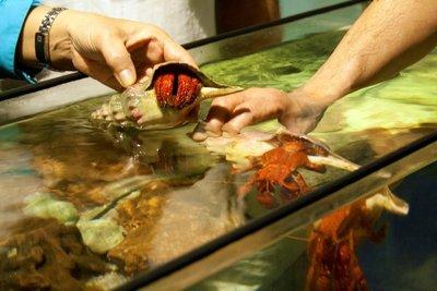 Hands_on_crabs.jpg