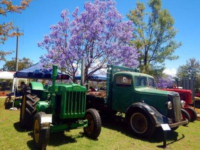 Jacaranda_..___Tractors.jpg