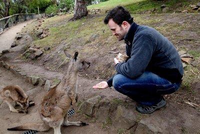Kangaroo9__Medium_.jpg