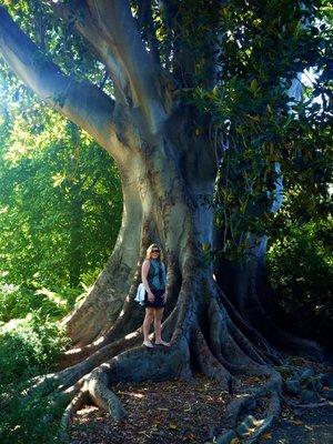 Large_tree.jpg