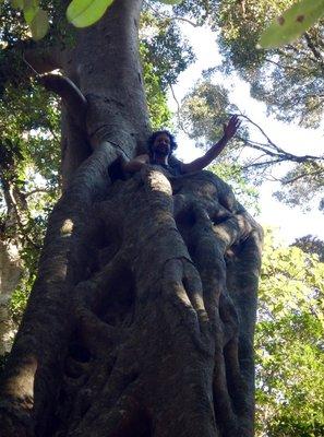 Mark_up_a_tree.jpg