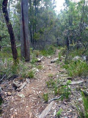 Path4.jpg