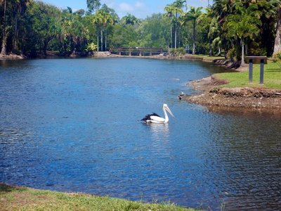 Pelican_freshwater_lake.jpg