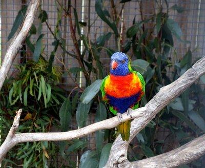 Rainbow_Lo..t1__Medium_.jpg