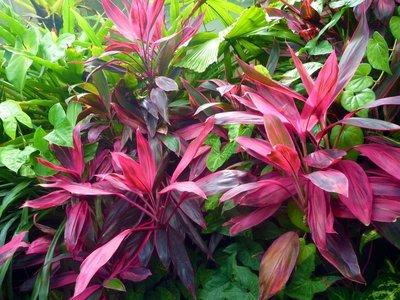 Red_leaves.jpg