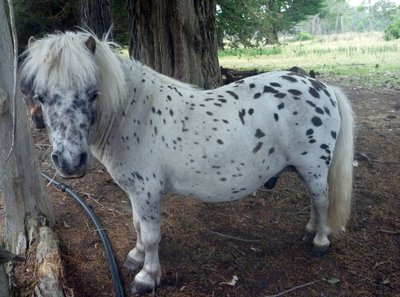 Spotty_Horse.jpg