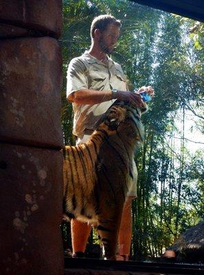 Sumartran_Tiger4.jpg