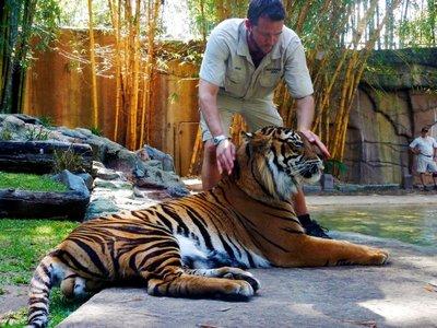Sumartran_Tiger_trainer.jpg