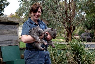 Wombat2__Medium_.jpg