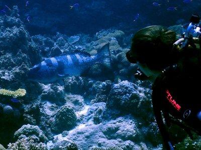 camoflage_Cod___diver.jpg