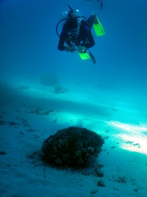 diver___giant_clam.jpg