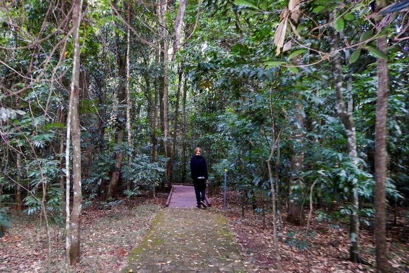 Daveo Rainforest