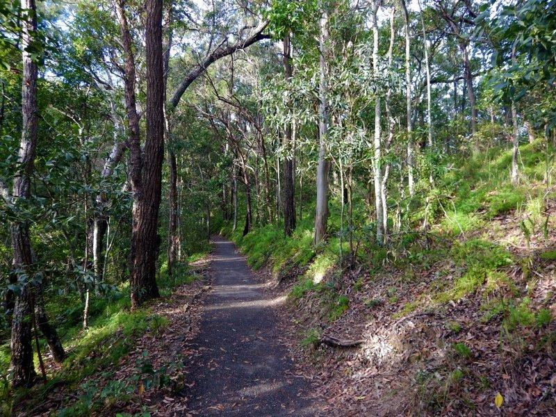 Rainforest Circuit1