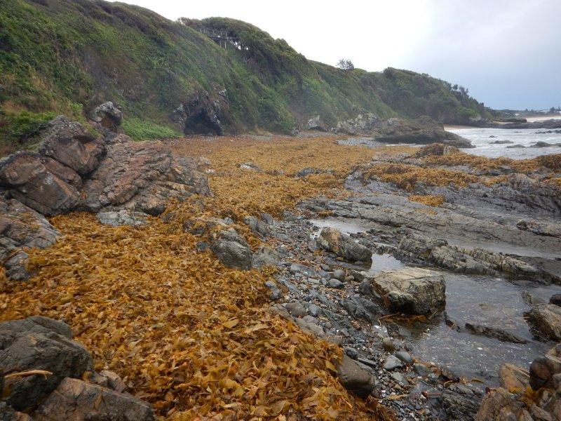 Sea Weed Beach