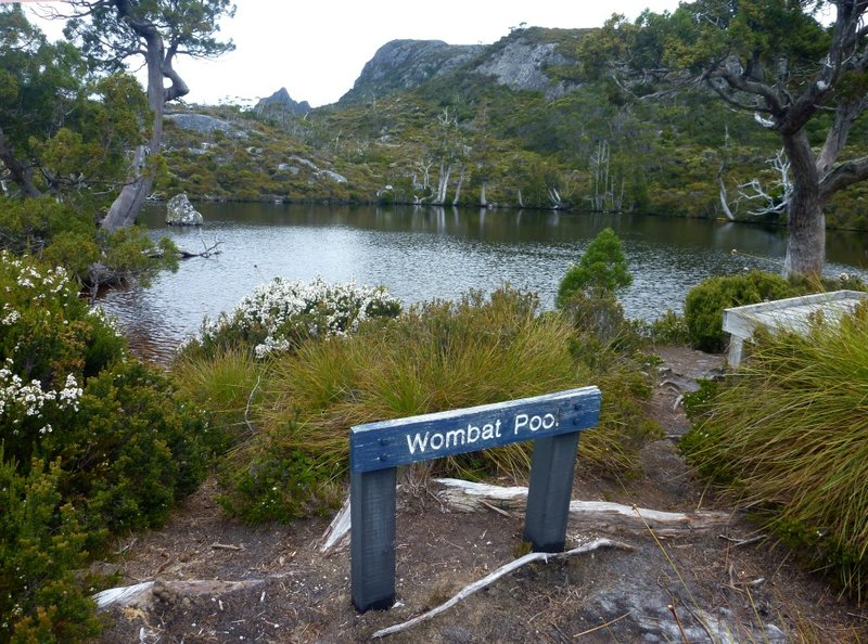 large_Wombat_Pool.jpg
