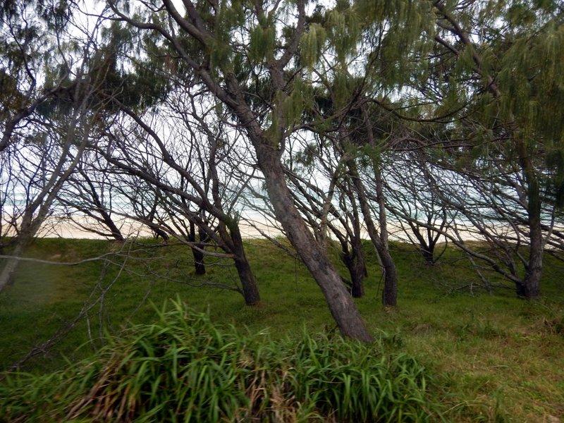 through the trees to the sea