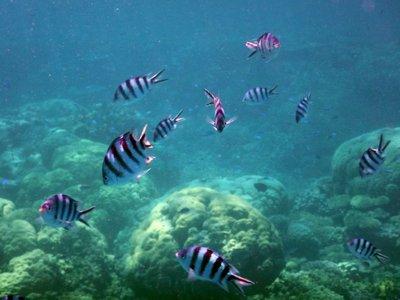 stripey_fish.jpg