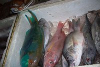 pick a fish