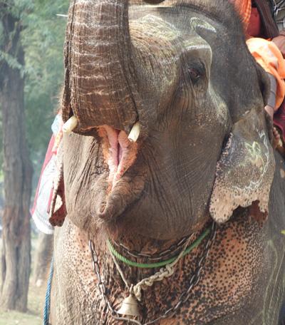 large_elephantroad.jpg