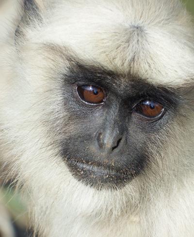 large_monkey1.jpg