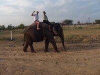 Elefantastic Apr 15