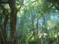 light thru the trees2