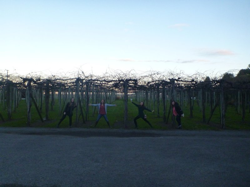 Wine tour in Blenheim