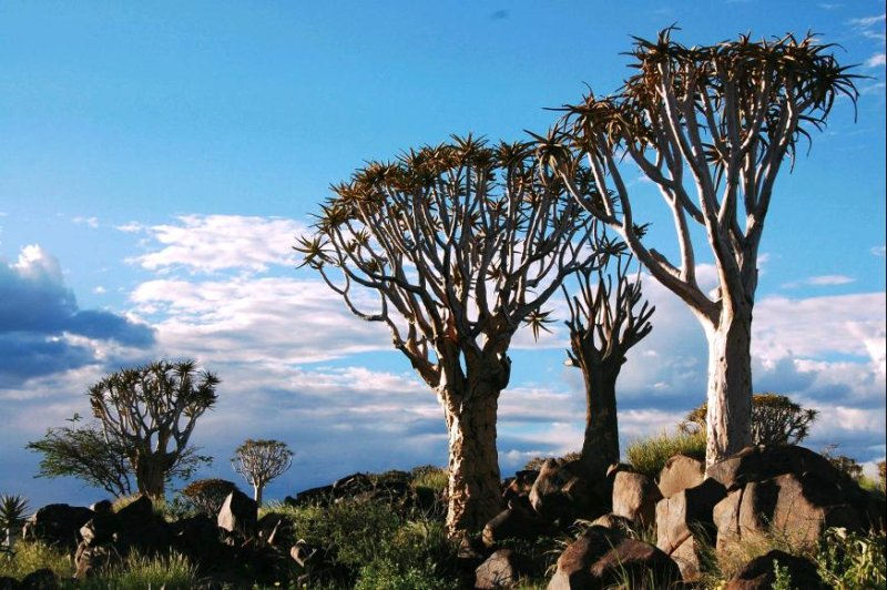 Quiver Tree Forest 6