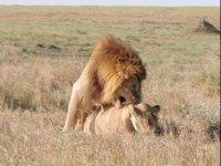Serengeti 12
