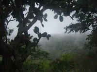 Ascension Island 11