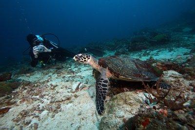 Sander_with_Turtle.jpg