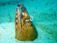 Eel Snake Black-finned1